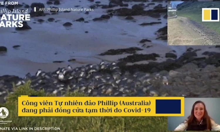 Hàng chục nghìn người xem cánh cụt diễu hành