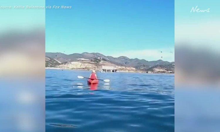 Cá voi húc tung hai du khách đang chèo thuyền