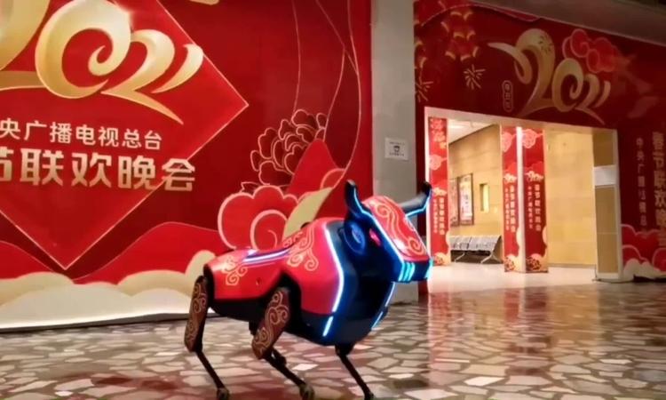 Dân mạng Trung Quốc phát cuồng vì 'Bò tót robot'