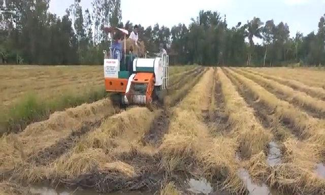Máy cuốn rơm họat động trên ruộng sình lầy