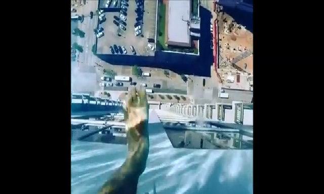 Bể bơi có đáy kính nhìn xuyên thấu