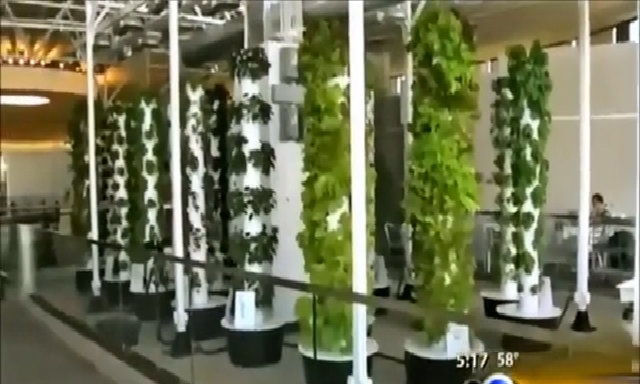 Vườn rau có hơn 1.000 cây giữa sân bay của Mỹ