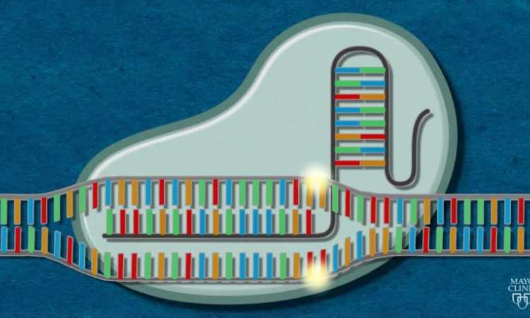 Cơ chế hoạt động của công cụ chỉnh sửa gene CRISPR-Cas9