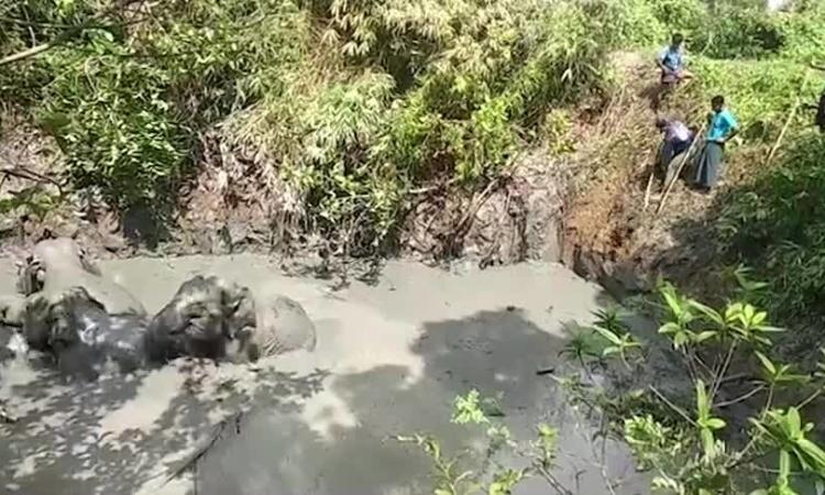 Dân làng giúp voi thoát hố bùn