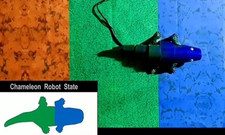 Robot tắc kè đổi màu theo môi trường